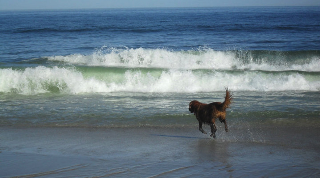Dog Friendly Beaches On Cape Cod Capebeachdog