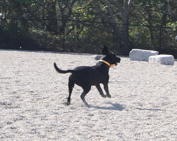 dog parks on cape cod