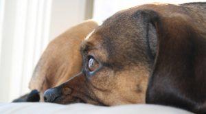 dog friendly hotels on cape cod