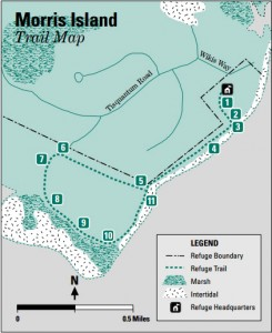 map of morris island trail in chatham ma