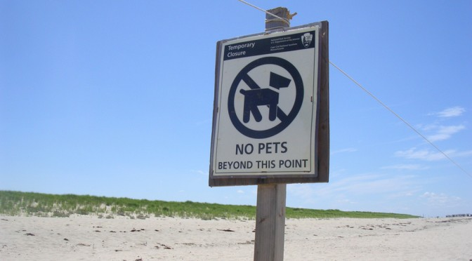 dogs aren't allowed on beaches in yarmouth. Bummer.