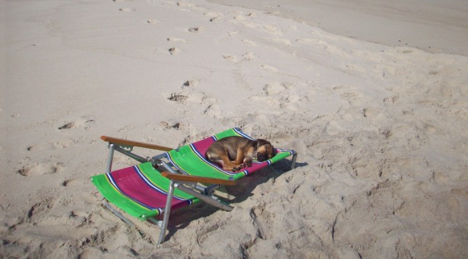 puggle sleeping on beach in dennis, ma
