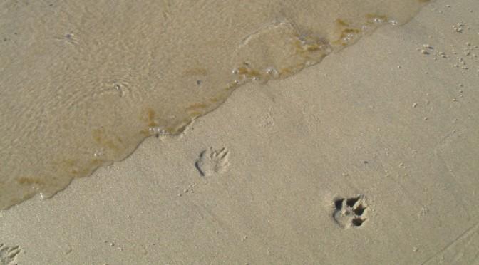 herring cove beach of the cape cod national seashore is dog-friendly