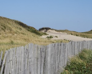 fence and dunes at head of the meadow beach