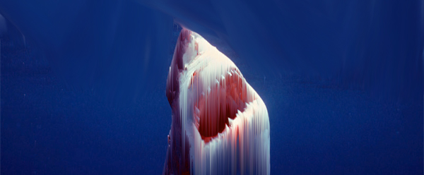 tIps to avoid a great white shark attack