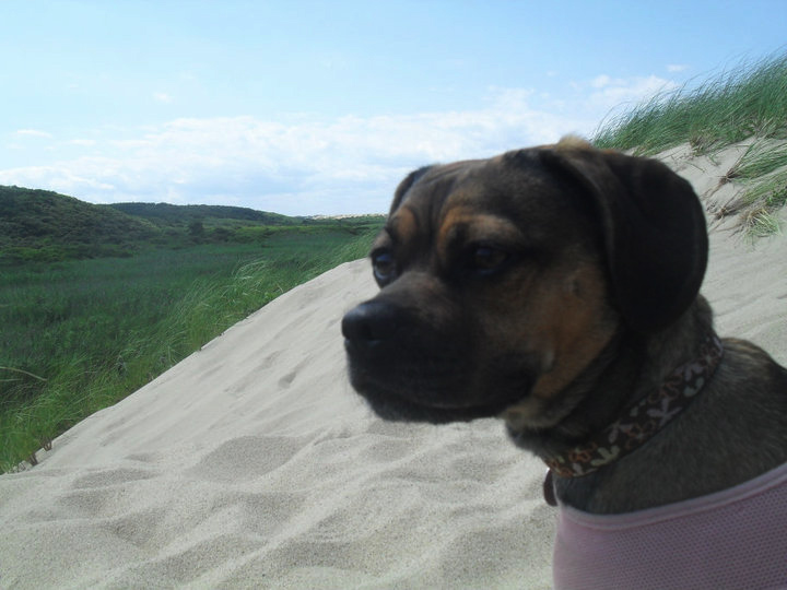 dogs are allowed at head of the meadow beach