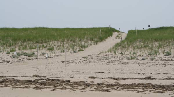 The ORV trails at Race Point Beach provide access to miles of the most beautiful seashore on Cape Cod.