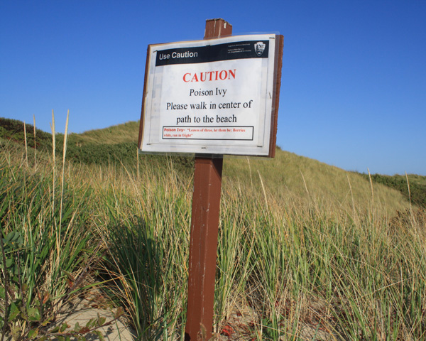 beware of poison ivy at head of the meadow beach