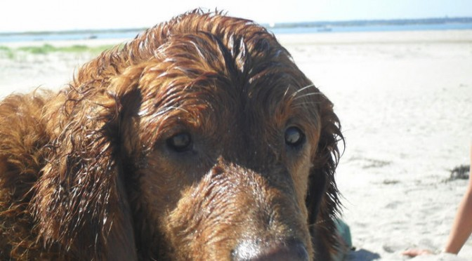 How to find a pet-friendly hotel on cape cod