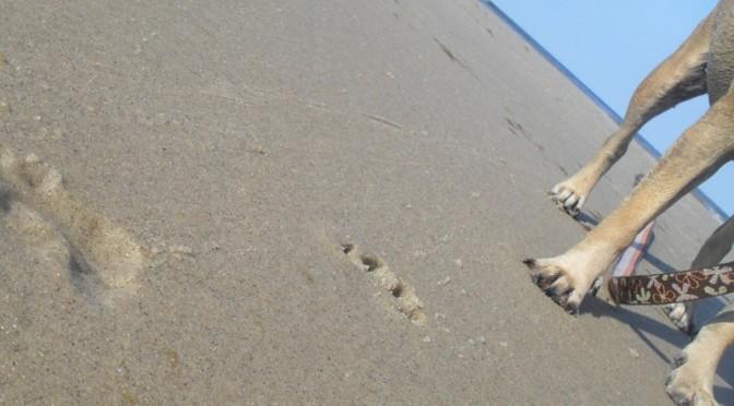 3 great dog walks on Cape Cod