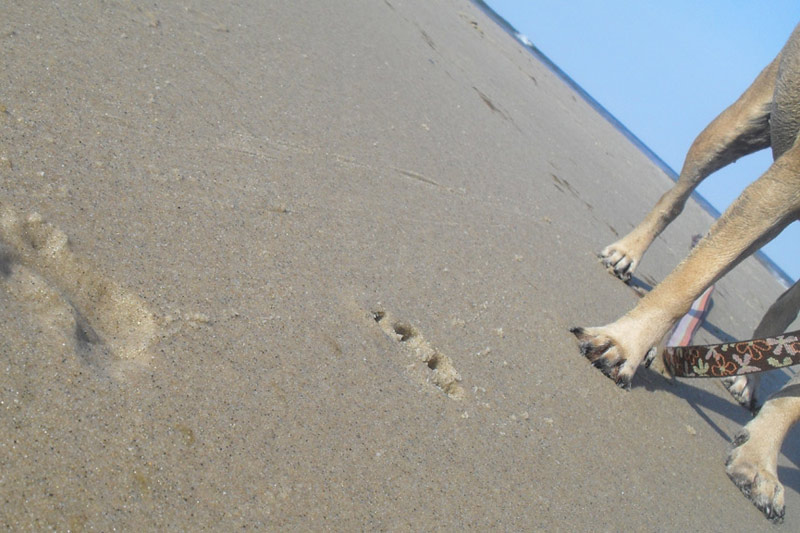 Pet Friendly Hotels On Cape Cod Part - 31: 3 Great Long Walks For Dogs On Cape Cod