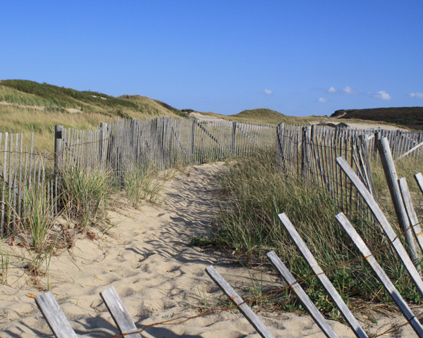 beach fence lines the path at head of the meadow beach in truro