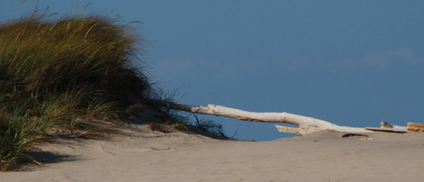 driftwood bleaching in the sun at head of the meadow beach in truro, ma