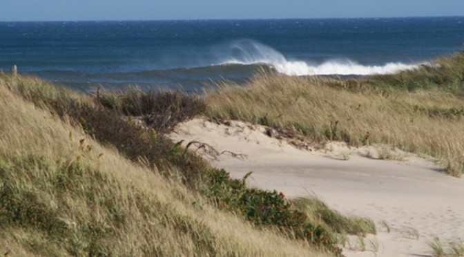 dog-friendly guide to the cape cod national seashore beaches