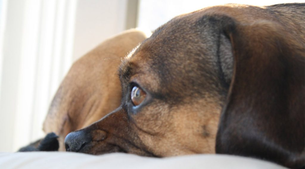 dog-friendly hotels in provincetown, ma