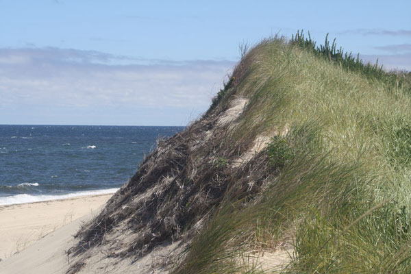 Watch out! Beach grass is loaded with hungry ticks.