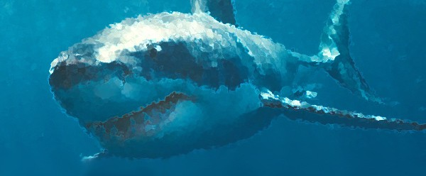 How to avoid a great white shark attack on beaches in Cape Cod.