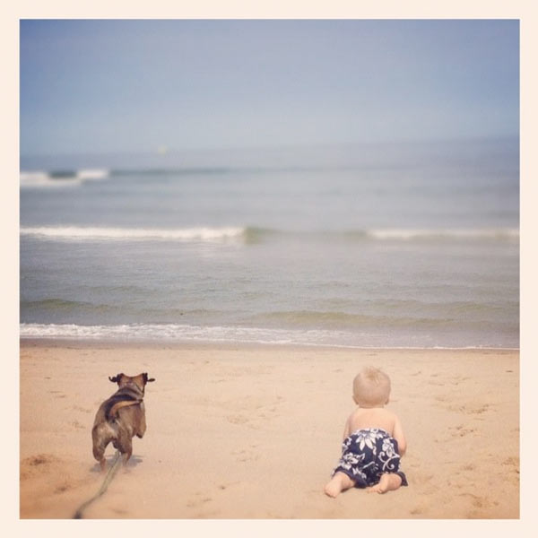 A boy and his dog playing at the beach.