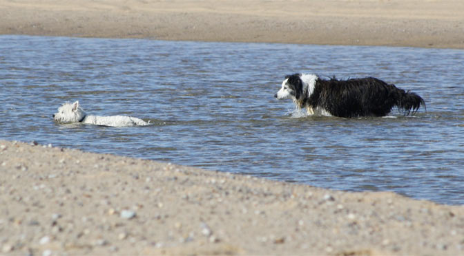 There's lots of great things for dogs to do in Mashpee, MA on cape cod.