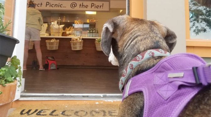 Dog friendly restaurants on cape cod where you can find pet friendly dining options for breakfast, lunch, and dinner.