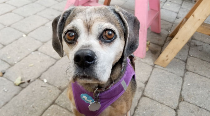dog-friendly restaurants in hyannis, barnstable, and cotuit
