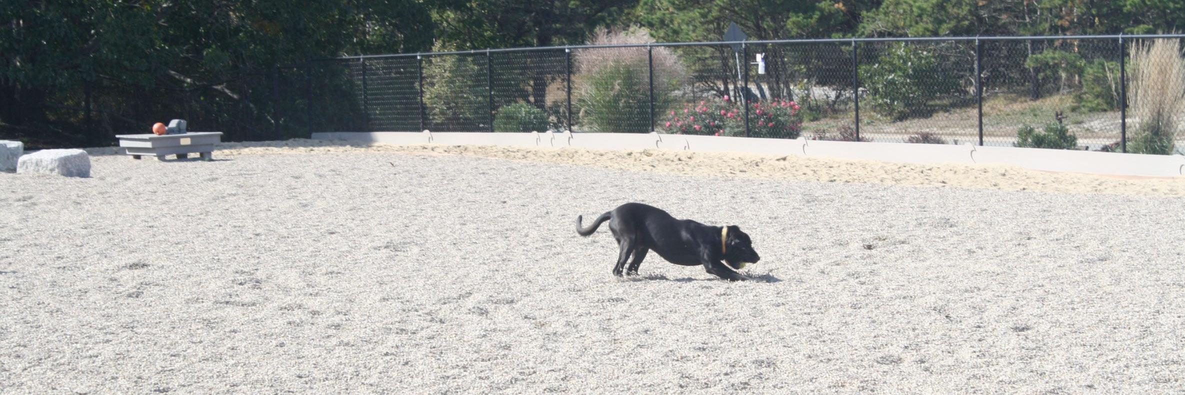 A dog runs free at the Pilgrim Bark Park, P-town's dog park.