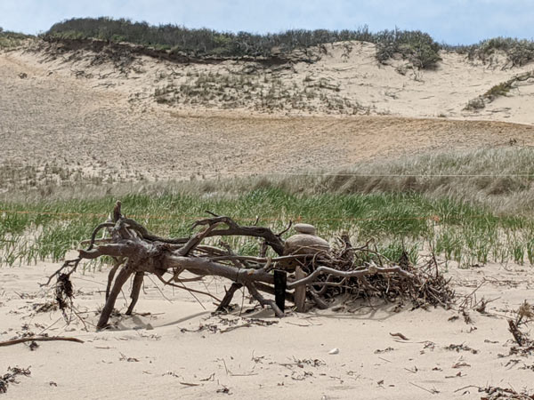 A driftwood pile at Head of the Meadow Beach, which allows dogs in the summer (at least until the piping plovers show up each year).