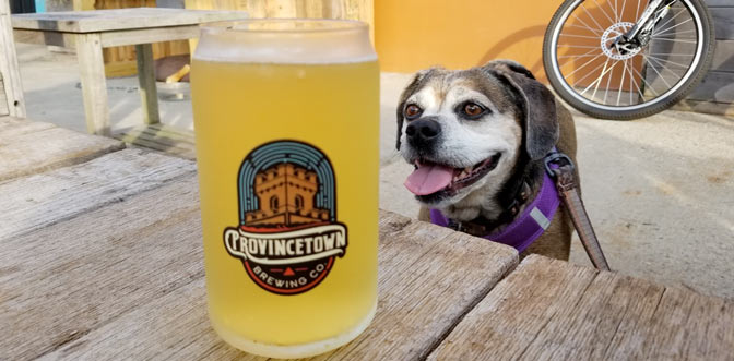 Nugget the puggle drools over a beet at Provincetown Brewing Co., a dog-friendly restaurant.