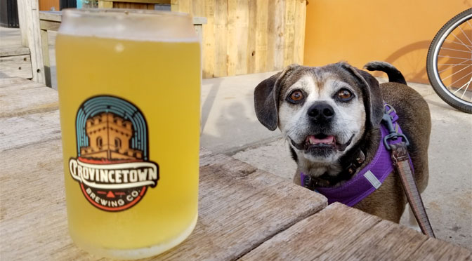 Breweries that allow dogs on Cape Cod (and a few Wineries Too)