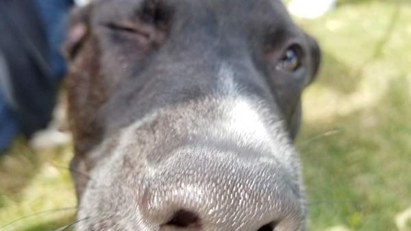 Smell some new friends up close at one of the great dog parks on cape cod!