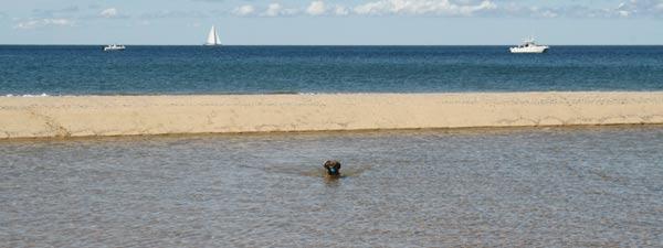 Dog swimming on a sandbar