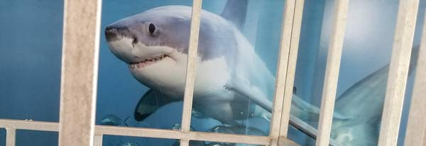 A shark cage at the Atlantic White Shark Conservancy in Chatham, MA on Cape Cod.