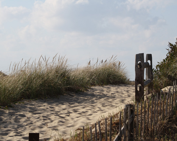 Cape Cod Dog Parks