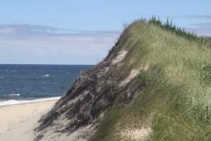 beach-grass-sand-dune-race-point-beach