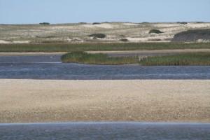 hatches-harbor-race-point-beach