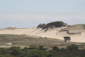 lonesome-tree-race-point-beach