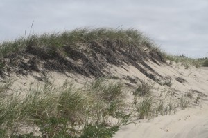 sand-dune-race-point-beach
