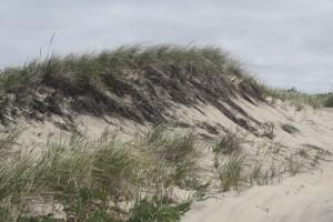sand-dune-race-point-beach