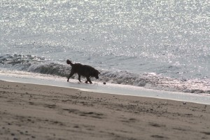 silhouette-dog-fetching-ball-beach
