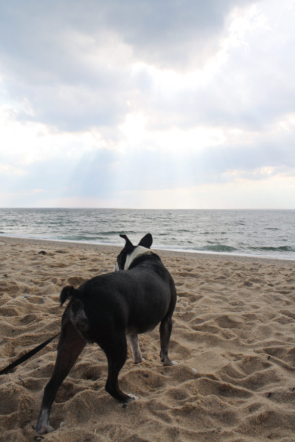 dog parks on cape cod - capebeachdog