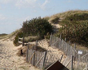 orv-trail-beach-path-truro