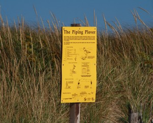 piping-plover-sign-truro